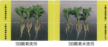NEWSB-酸素は「根と葉」の成長に有効です